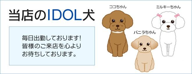 当店のアイドル犬