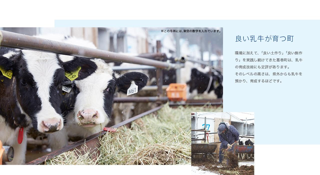 良い乳牛が育つ町