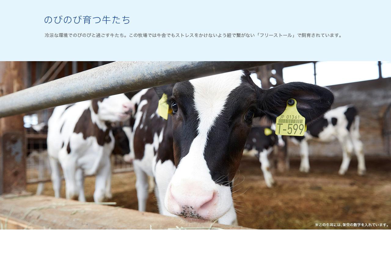 のびのび育つ牛たち