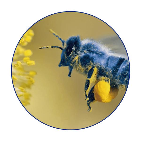 『幸せの青い蜂ブルービー』の説明〜〜一枚の絵に秘め
