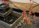 世界に誇る畳、日本の文化