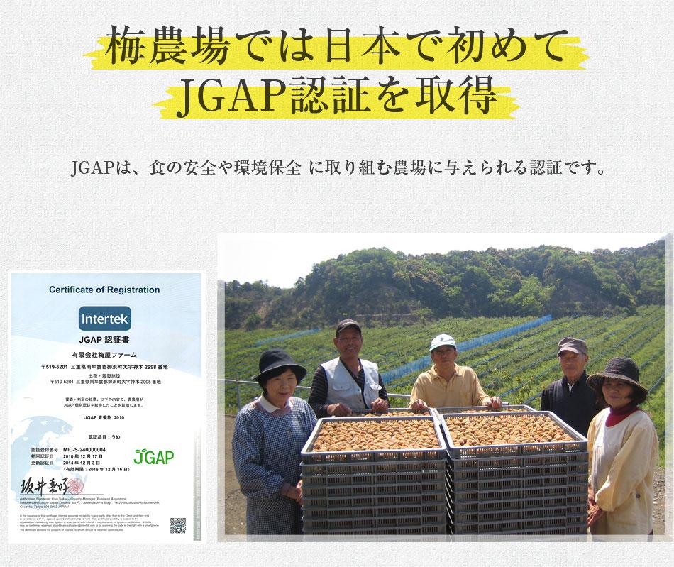梅農場では日本で始めてJGAP認証を取得