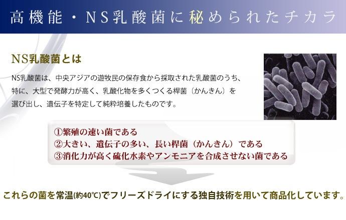 ハイパーラクタム - NS乳酸菌