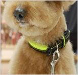 犬用防水リード/ASHUセーフティー&レインレザーカラー Sサイズ 小型犬