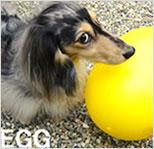 犬用おもちゃ egge エッグ