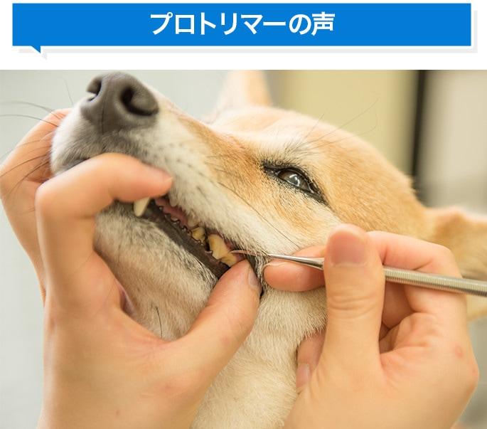 愛犬・愛猫用歯石取りスケラー
