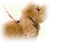 ハーネス>超小型犬