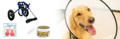 老犬・介護カテゴリー
