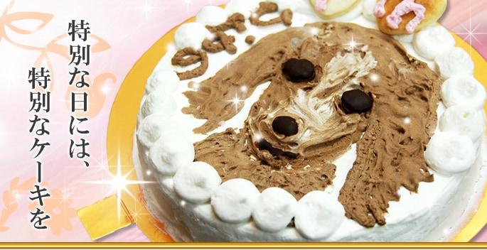 特別な日には、特別なケーキを border=