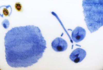 砥部焼 ブルー木の葉