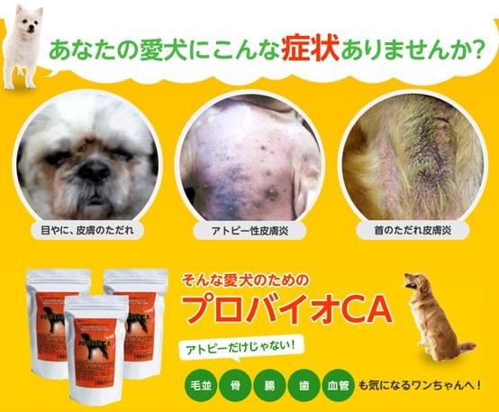 【動物用サプリメント/PROBIO CAプロバイオシーエー】