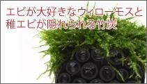 エビが大好きなウィローモスと稚エビが隠れられる竹炭のコラボ!「ウィローモス バンブーハウス」