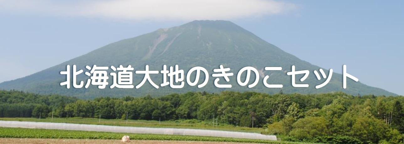 北海道大地のきのこ
