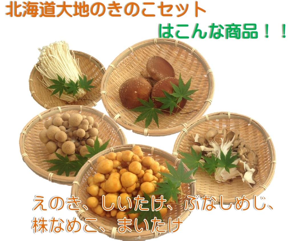 北海道大地のキノコセット内容は、えのき、しいたけ、ぶなしめじ、株なめこ、まいたけ