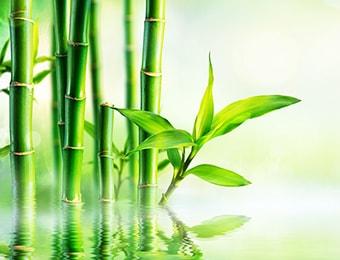 「竹のミネラル水」をベースに、高品質のハーブを厳選
