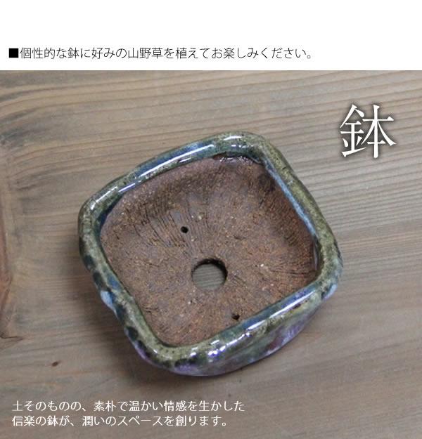 山草鉢 陶器山野草鉢 しがらきやき植木鉢
