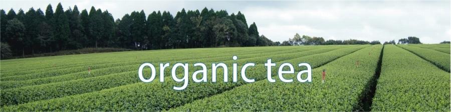鹿児島県霧島市の高台に広がる広大な有機茶畑
