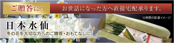 ご贈答に!お世話になった方へ直接宅配承ります。日本水仙