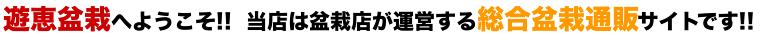 遊恵盆栽へようこそ!!当店は盆栽店が運営する総合盆栽通販サイトです!!