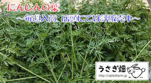 にんじんの葉