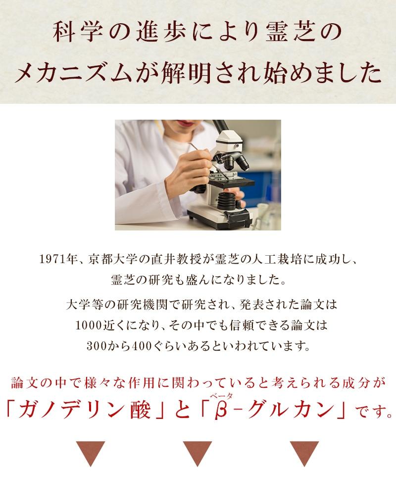 科学の進歩により霊芝のメカニズムが解明されてきました。1971年、京都大学の直井教授が霊芝の人工栽培に成功し、霊芝の研究も盛んになりました。大学などの研究機関で研究され、発表された論文は1000近くになり、その中でも信頼できる論文は300から400ぐらいあるといわれています。論文の中で様々な作用に関わっていると考えられる成分がガノデリン酸とβグルカンなのです。