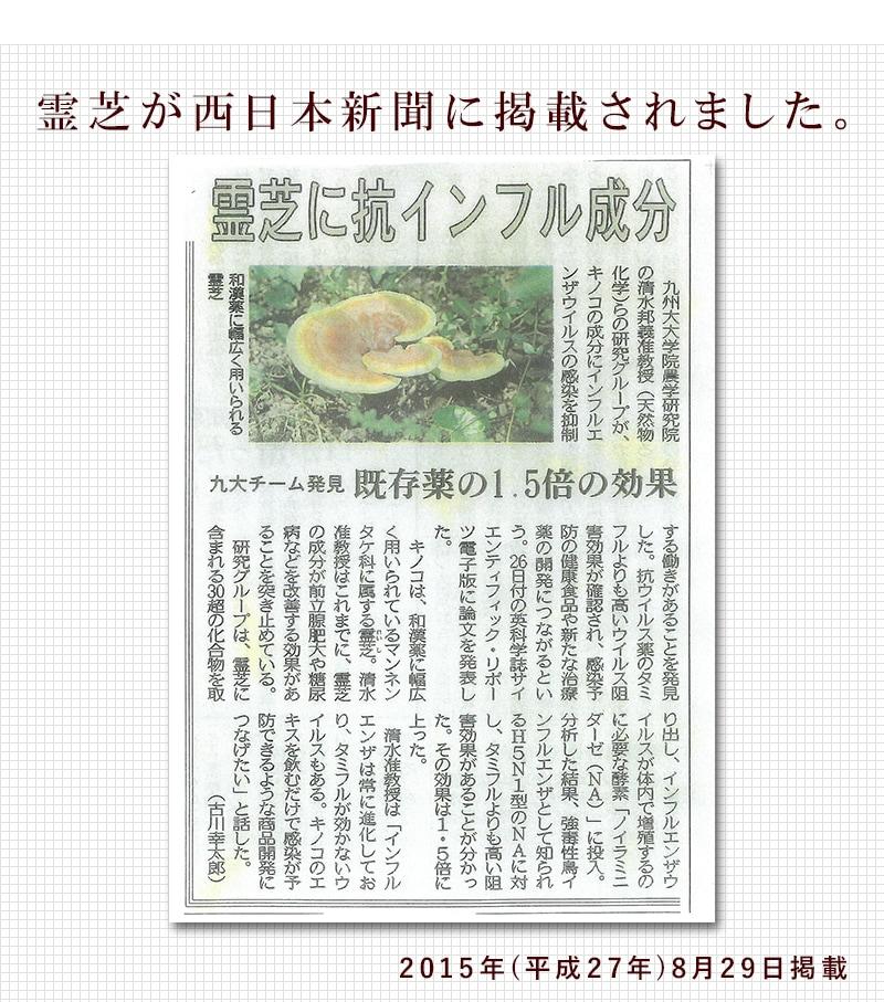 霊芝が西日本新聞に掲載されました。2015年平成27年8月29日掲載。