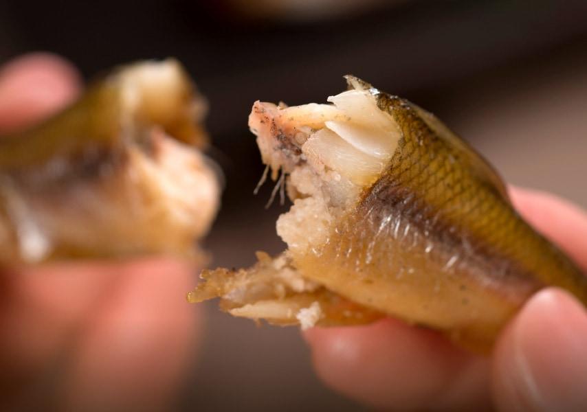 最近では良く知られたことですが、居酒屋チェーンのお店などで出されるししゃもはカラフトシシャモ(別名カペリン)という魚で、ししゃもとは全く異なる種類の魚なのです。そもそもししゃもは日本固有の魚であり、特に北海道・太平洋沿岸の一部でしか獲れない大変貴重な魚です。実はししゃもは鮭と同じく回帰性のある魚で、川で生まれ、海で育ち、そして生まれた川へ帰ってきて産卵するという習性があるのです。ここ釧路の母川「釧路川」へ帰ってくる頃には卵も完熟し、寒さに耐える脂を身にまとっているのです。そんな極上の釧路産ししゃもを絶妙な塩加減で干しました。