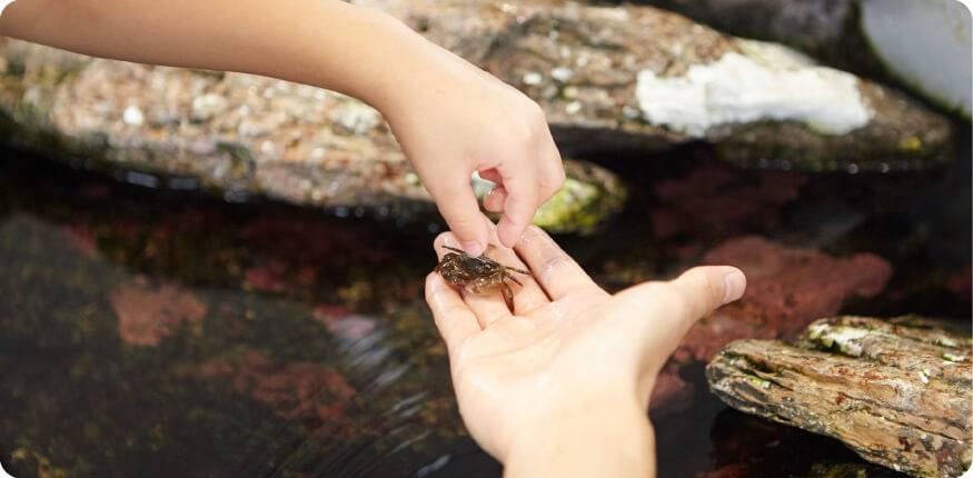 タッチプールでお魚に触れる体験が楽しめます。