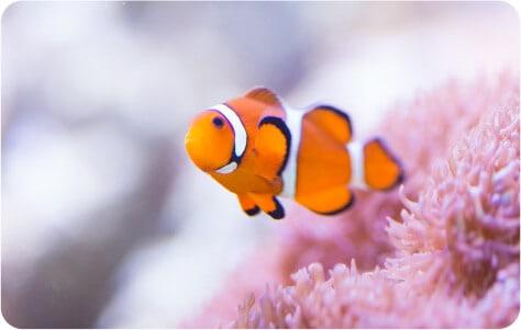 様々なお魚に癒されるひととき。