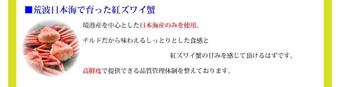 日本海産の紅ズワイ蟹