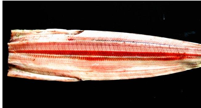 太刀魚干物の生の写真