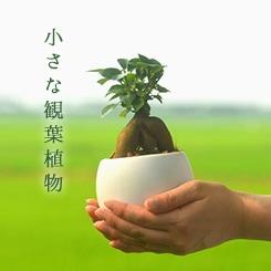 小さな観葉植物