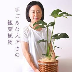 手ごろな大きさの観葉植物