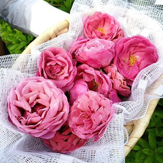 薔薇チョコの食用バラ/山口県光市認定の光セレクション