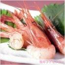 日本海 甘エビ500g