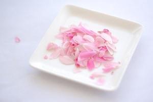 光市三井で育った食用薔薇(ロイヤルボニカ)