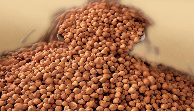 世界一の品質を誇る、ピエモンテ産のヘーゼルナッツ