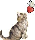 可愛い猫の限定ポーチ