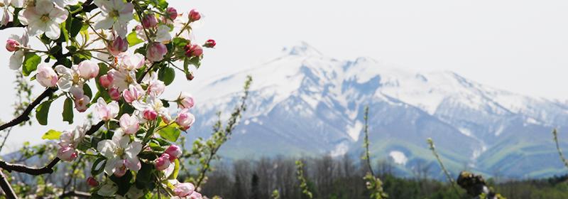 栽培適地としての岩木山の麓