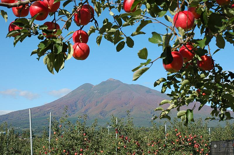 りんごの味に影響する、寒暖の差