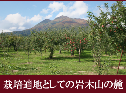 りんご栽培適地としての岩木山の麓