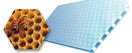 ハチの巣とテクセル