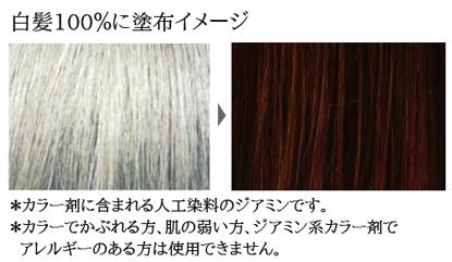 チョコブラウン染色イメージ