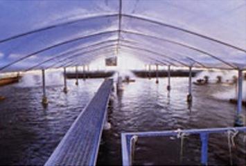 自然豊かな指宿の水を生かした鰻養殖