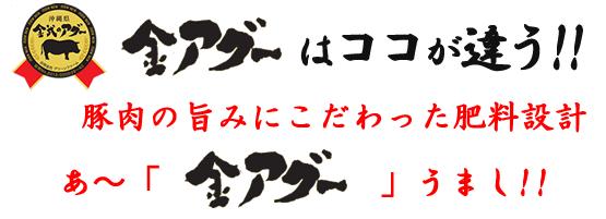 金武のアグーはここが違う!!