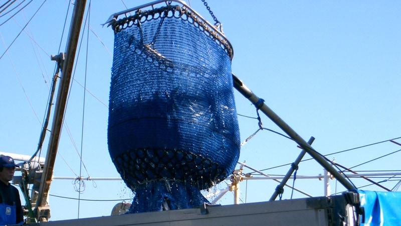 気仙沼直送秋刀魚さんま通販は東北うまいもの市場で。