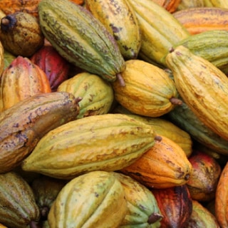 モリドル 糖質制限 チョコレート