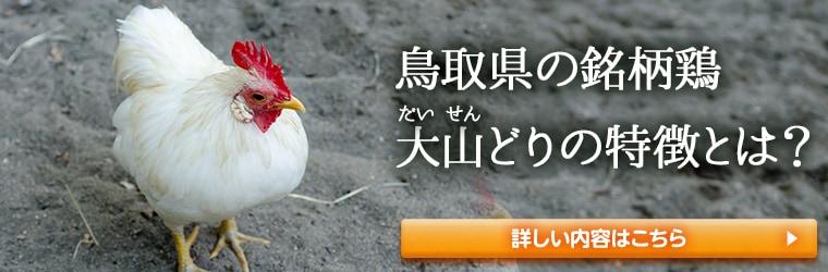 鳥取県の銘柄鶏「大山(だいせん)どり」の特徴を徹底解説!