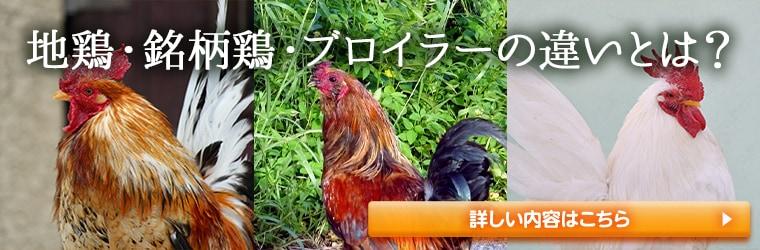 地鶏・銘柄鶏・ブロイラーの違いを分かりやすく解説!