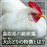 鳥取県の銘柄鶏「大山(だいせん)どり」の特徴を徹底解説!ページへのリンク